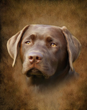 Pet memorial tribute portraits, dog, cat funeral tributes.